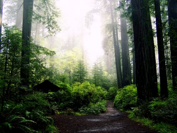 All the way in New York City, we miss the Humboldt Redwoods. Photo by Stephanie Haller. 